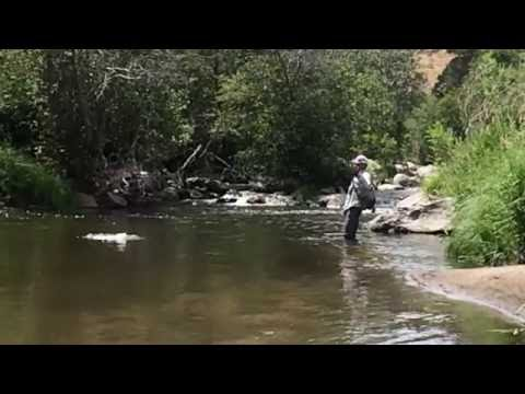 Wyoming Mouse Fishing