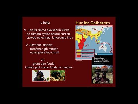 Kristen Hawkes: Hunter-Gatherers/Life History And Reproduction
