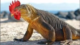 Nyata & Unik !! Inilah 15 Hewan Paling Aneh Dan Langka Di Dunia