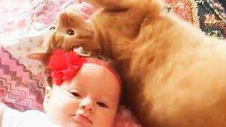 Самые смешные коты и дети.Смешное видео про котов✿Забавные дети и кошки.