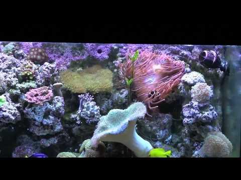 3D reef background - UPDATE