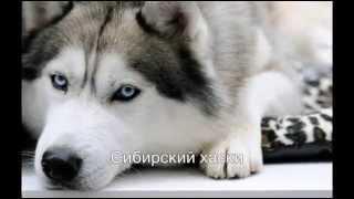 Любителям животных.  Породы собак