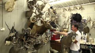 BRR - Mesquite Creek Taxidermy