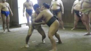 Sumo vs Judo...相撲と柔道