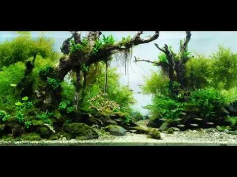 Most Beautiful Aquascapes (Underwater Landscapes)