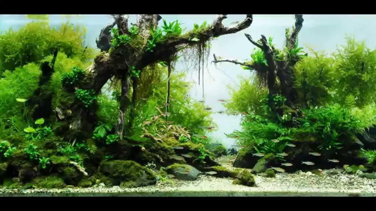 beautiful aquascapes underwater