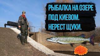 Рыбалка на озере под Киевом Нерест щуки