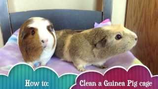 How to clean a guinea pig cage with fleece! :)