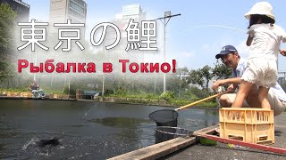 CARP fishing in central Tokyo Ловля карпа в центре ТОКИО