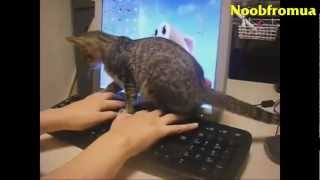 Funny Animals Video Clips Compilation.