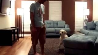 Labrador Training And Puppy Barking!+ Dog Training San Antonio,dog Training In Orlando