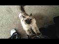 こいつ、さそってやがるぜ。誘い上手な猫たちの動画総集編