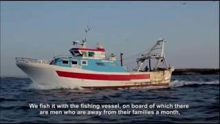 Рыбное хозяйство | переработка рыбы и морепродуктов | Италия  |