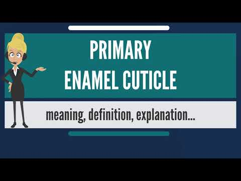 What Is PRIMARY ENAMEL CUTICLE? What Does PRIMARY ENAMEL CUTICLE Mean?
