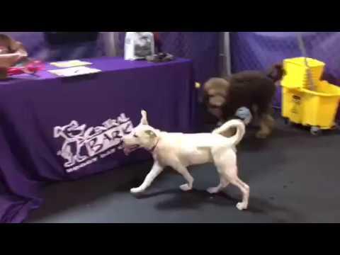 Puppy Power Hour! | Central Bark Atlanta