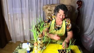Как вырастить зеленый лук зимой в домашних условиях