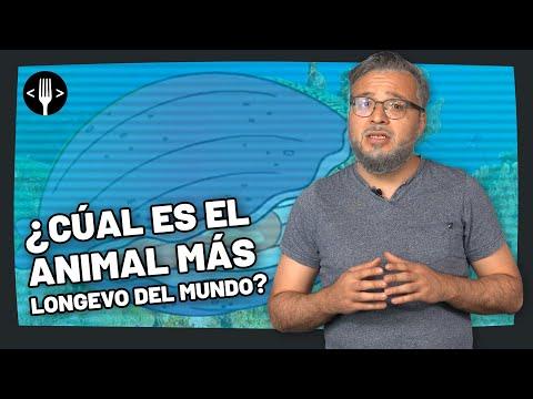 ¿Cuál es el animal más longevo del mundo?