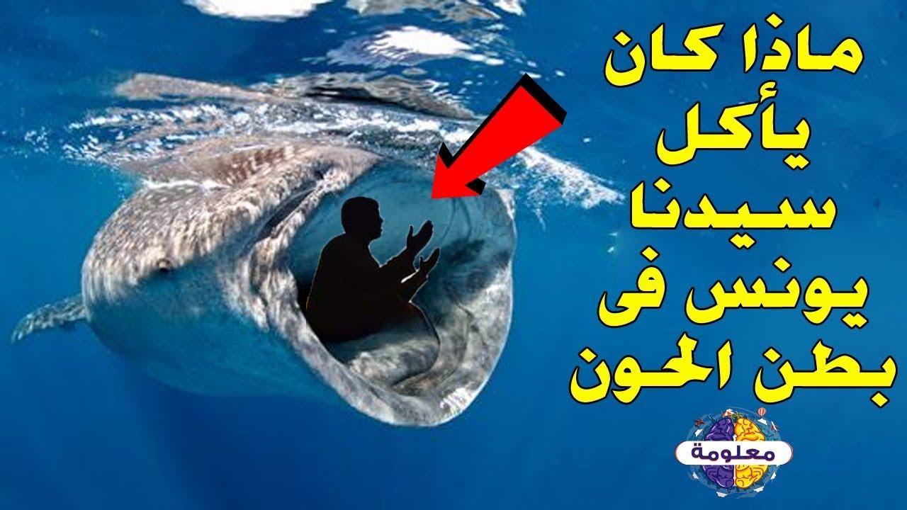 أين دفن يونس عليه السلام وماذا حدث له فى بطن الحوت قصة سيدنا يونس الجزء الثاني Youtube