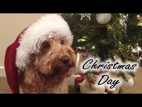Christmas Day Vlog + Dog Dancing