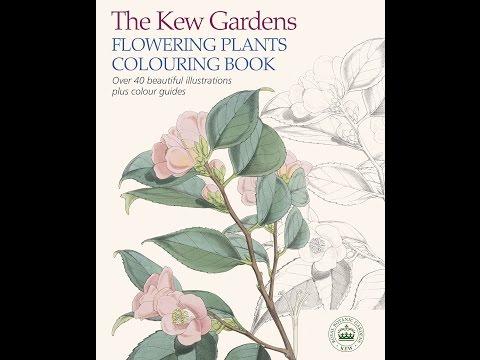 flip-through-the-kew-gardens-flowering-plants-colouring-book