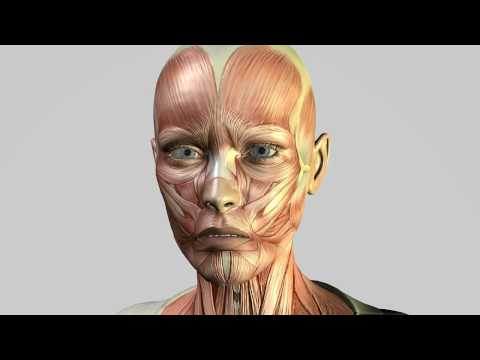 Lilith: Virtual Patient: Face Muscles