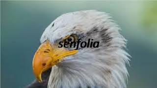 How to say bald in Esperanto