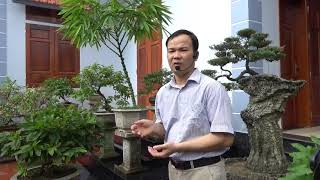 Bộ Tuế Hàn Tam Hữu  - The three friends in the snowy weather in bonsai