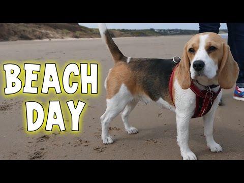 Squiddy Vlogs - Beach Day! [23]