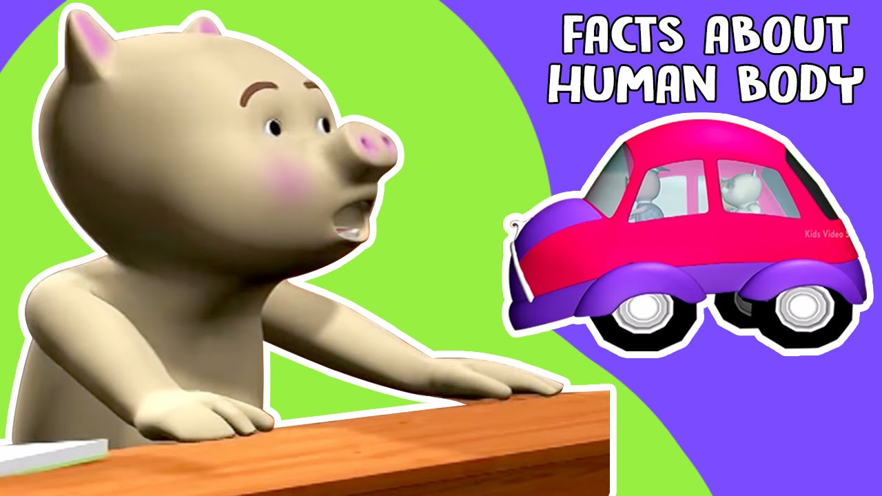 general knowledge questions and answers for kids human body facts youtube