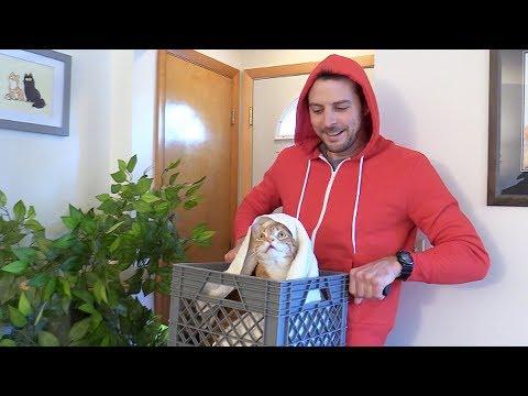 E.T. Cat Halloween Costume!