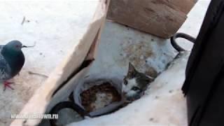 Котята живут с голубями на улице под плитой.  Апатиты