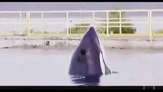 Full Documentary Animal Call of the Killer Whale Wildlife