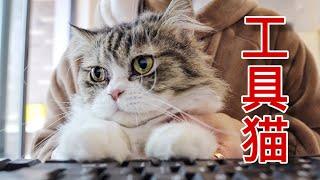 【李喜貓】养猫后我的工作状态:放心,有15只猫帮忙,没有什么事是搞不砸的