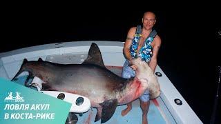 Трофейная рыбалка на акул в Коста-Рике. Рыба-молот и акулы трешеры