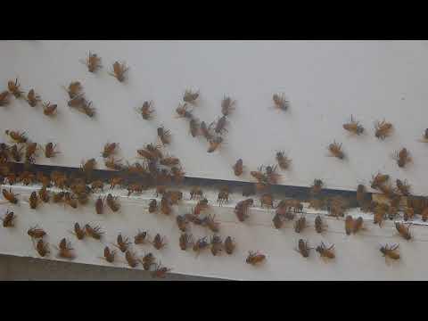 Native Gardens Pure Honey - Worker Bee's - Washboarding