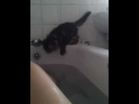 Curiosity  drowned the kitten