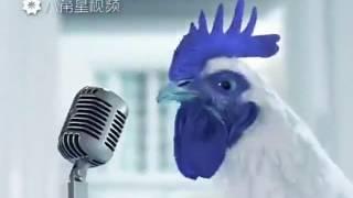 Поющие петухи и курицы