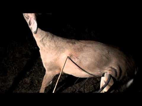 Penetration Test: Tiny Stone Arrowpoints On A Deer (HD)