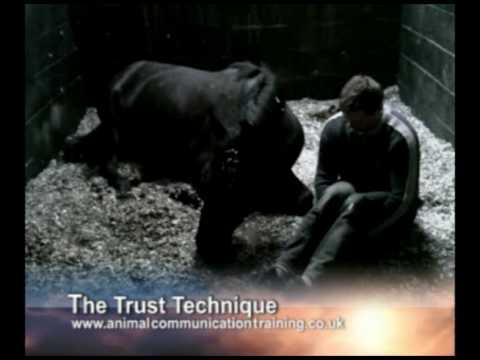 Animal Communication James French