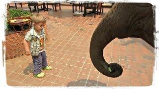 Приколы с Животными и Детьми | Fun with Children and Animals #469
