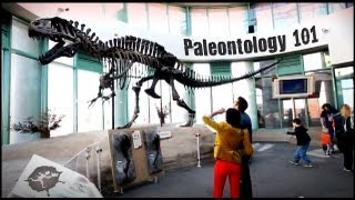 Paleontology 101 - Untamed Science
