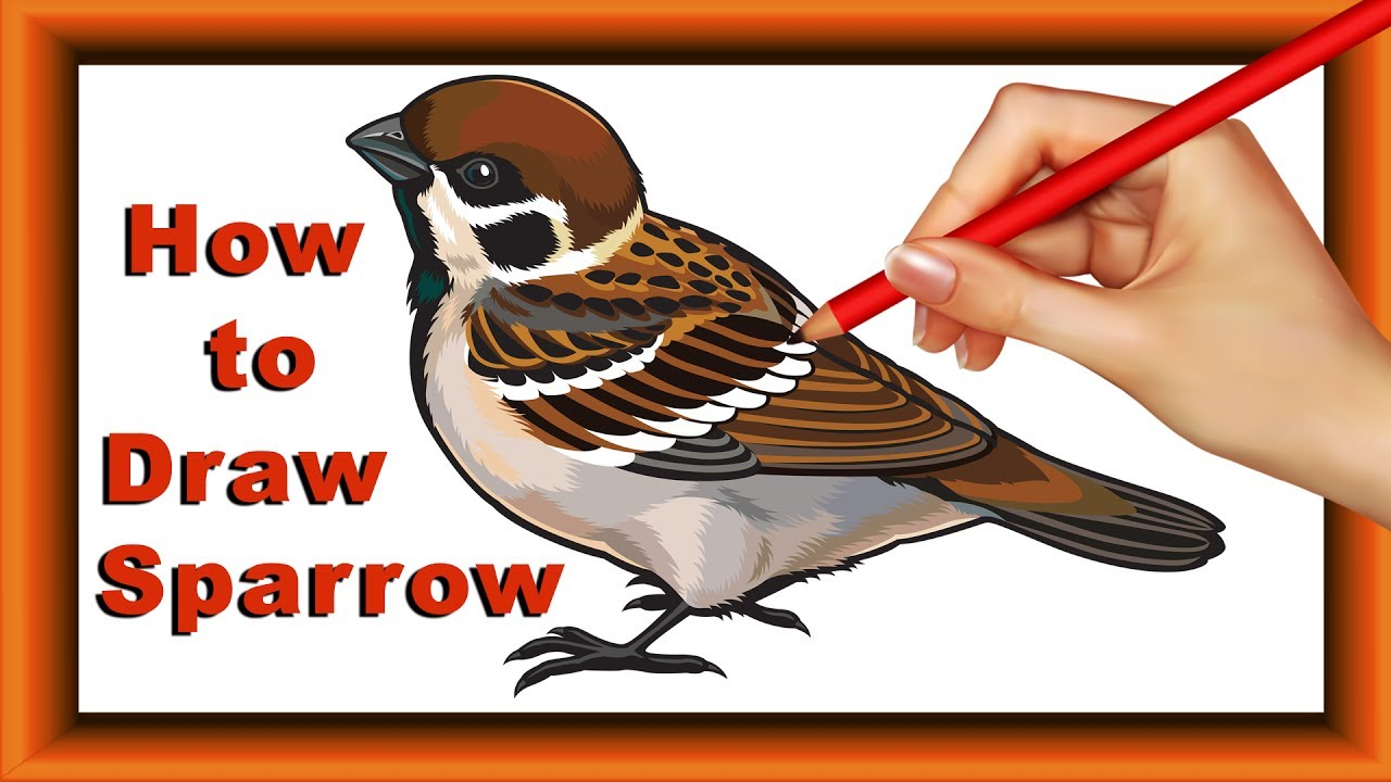 Step by Step how to Draw and color Sparrow for kids|Simple ...