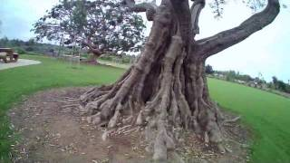 Proto X FPV - Tree Trimmin 1