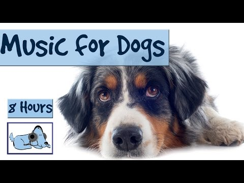 8 Hours of RelaxMyDog Music! Soothing Music for Dogs