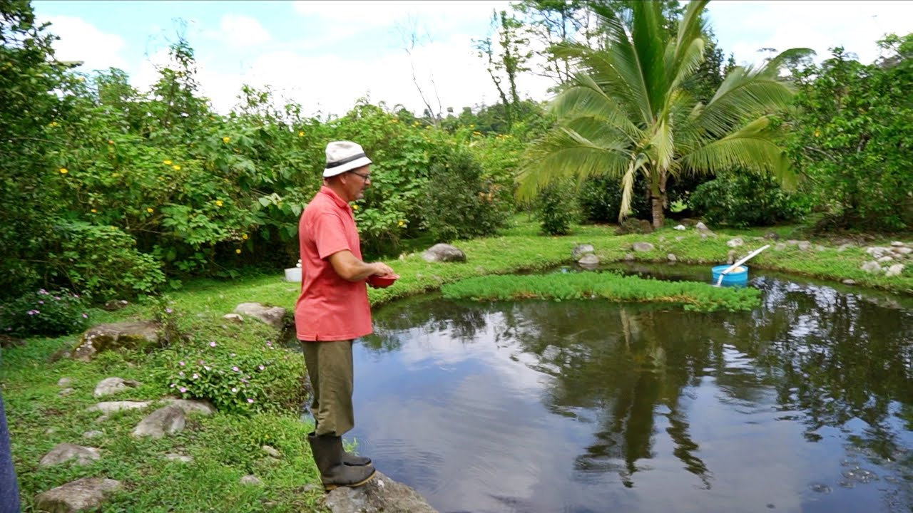 90 Of His Family S Food Is Homegrown Through Permaculture Aquaculture Youtube