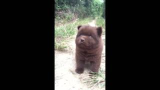 野生捕獲熊bb