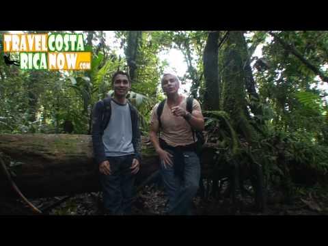 Monteverde  Santa Elena Cloud Forest