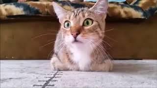 Кошка смотрит ужасы  😂😂😂  лучшие приколы с котами😍
