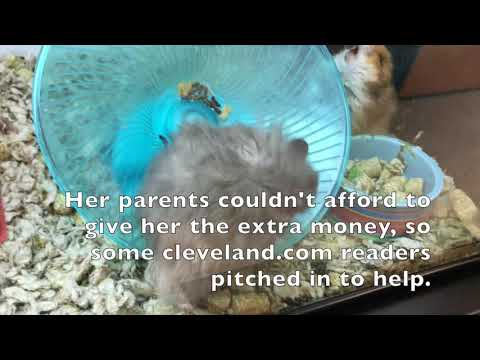 Readers help little Tiffany Everhart get her hamster: A Greater Cleveland (video)