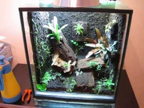 Poison Dart Frog Terrarium Vivarium With Plants Youtube